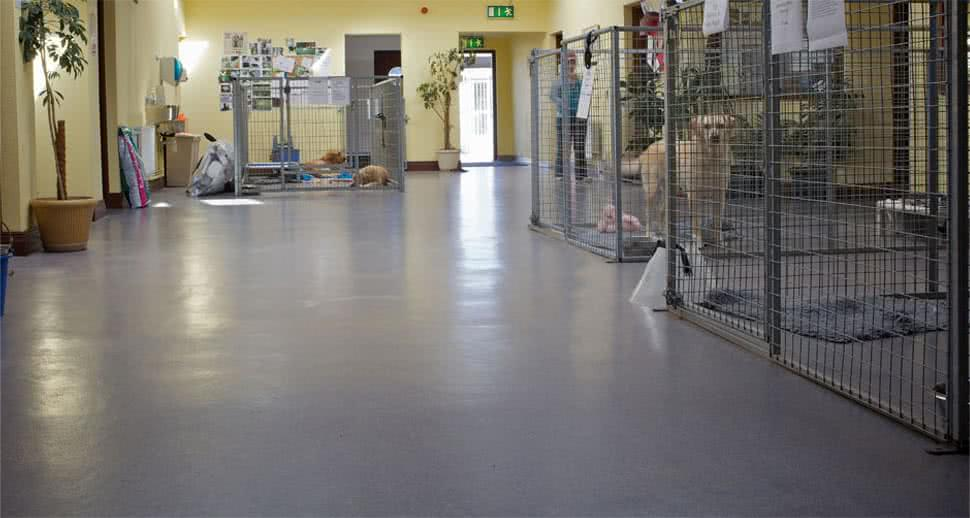 Kennel pmma resin flooring
